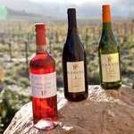A wide range of wines from our Lifestyle Collection to Reserve Collection
