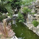The pond and water fall