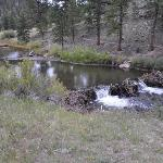 River, beaver dams and trout