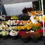 グリーンマーケットのお花