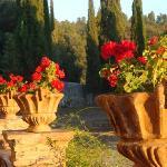 flowers on the wine tasting terrace