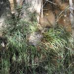 Galapago leproso en el arroyo