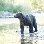 Our Bear!