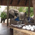 Elephants roaming the camp