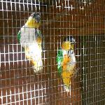 Very friendly birds