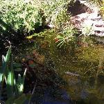 Pond in 'open' area