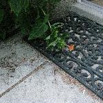 The doorstep