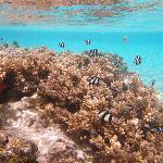 Aroa beach snorkelling right off shore