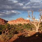 Im Capitol Reef NP