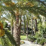 garden from restaurant