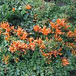 The flora at Yalu