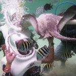 SeaTrek w/ stingrays