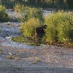 First moose