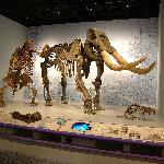Jefferson's Ground Sloth, Mastodont, and Giant Beaver