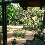 Burchell's Bush Lodge Foto