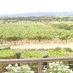 View of vineyards from patio table (food/wine pairing)
