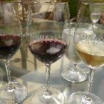 Wine Tasting at Signorello