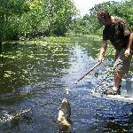 Guide Feeding the Alligators!