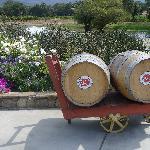 Wine barrels near garden