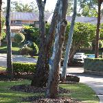beautiful peaceful grounds surround the Motel rooms & Vills