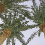 Palms in the courtyard