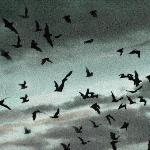 Carlsbad_Bat Flight 4