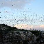 Carlsbad_Bat Flight 5