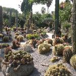 valletta delle piante grasse con Crusoni