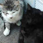 Für Katzenliebhaber diese wunderhübschen Kätzchen, die nicht ins Haus dürfen, aber gerne laaaang