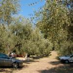 parcheggio oliveto