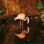 Pink flamingo at night
