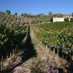 Vineyards & Fiorano winery and B&B