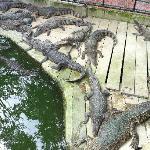 That's a croc...