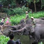 elephants feeding after the show