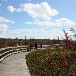 Wetland and ways
