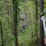 Swinging through the trees