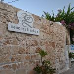 Xenones