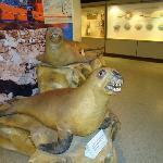 10- Museo Lorenzo Scaglia .
