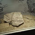 9- Museo Lorenzo Scaglia,roca con gusanos petrificados de 48.ooo años.
