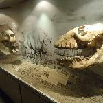8- Museo Lorenzo Scaglia .