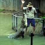 Wonderful croc show!