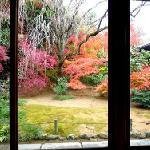 お茶室から見える庭園