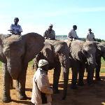 Handlers on the elephants
