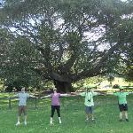 Fig Tree Botanical Gardens