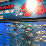 Piranha Aquarium