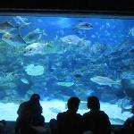 Amazing school of fishes