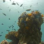 Pinnacle with christmas tree worms and fish