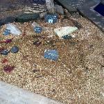 visite à l'aquarium de Saint malo