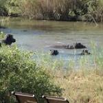 Guests viewing a sighting of a few hippo's from our deck