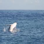le balene!!!!